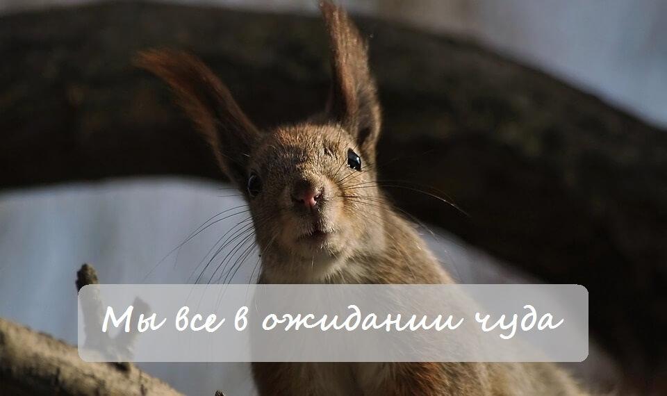 Услуги настройки Яндекс Директ - в ожидании чуда